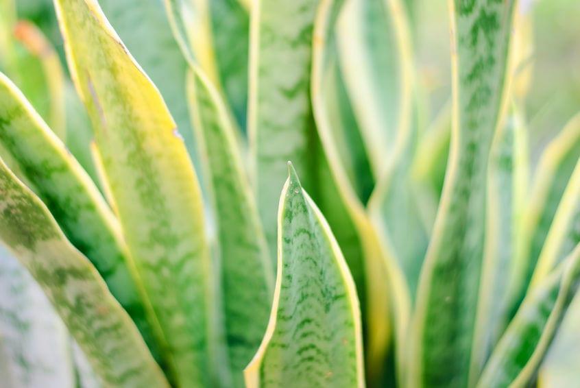 9 Pflanzen im Schlafzimmer, die Ihnen beim Schlafen helfen