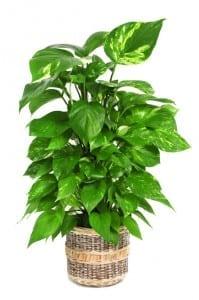 9 pflanzen im schlafzimmer die ihnen beim schlafen helfen. Black Bedroom Furniture Sets. Home Design Ideas